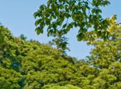 巣雲山(ハイキングコース)